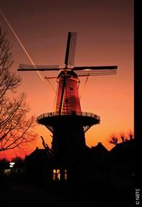D1902 - Valentine's in Antwerp & Amsterdam