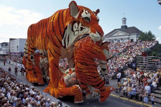 Dutch Dahlias on Parade - Tigers made out of Dahlias in Holland