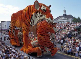 Hollands, Netherlands, Zundert, Dutch Dahlias on Parade - Tigers made out of Dahlias in Holland