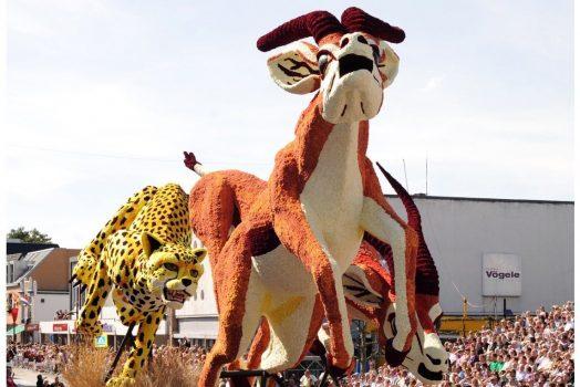Dutch Dahlias parade in Holland