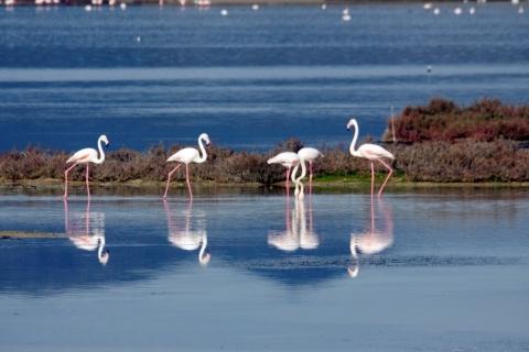 South West Sardinia, Italy - Flamingoes