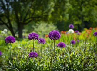 RHS Garden Harlow Carr, Harrogate, North Yorkshire - Flower Show - Spring-Childrens Gardening Event © RHS, sirastudio