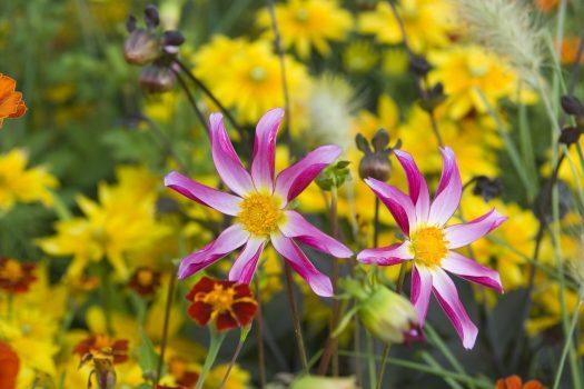 Floriade, Amsterdam, Almere, Netherlands - 14f. Flowers - Courtesy of floriade.com