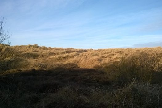 Aldeburgh (Jenny NCN) 07