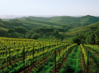 Italy, Piedmont, piemonte, Asti, (Turin) Vineyards, Wine © From the Cartoline dellAstigiano photo contest