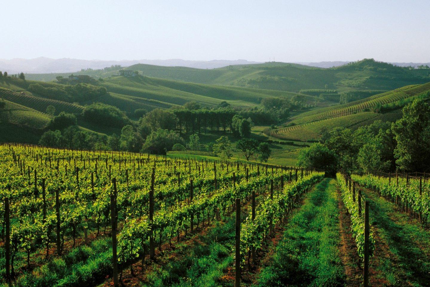 Italy, Piedmont, piemonte, Asti, (Turin) Vineyards, Wine © From the Cartoline dellAstigiano photo contest