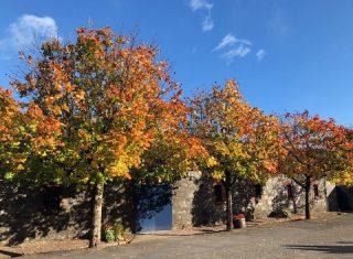 Autumn Colours, Jameson's Distillery, Midleton, Ireland