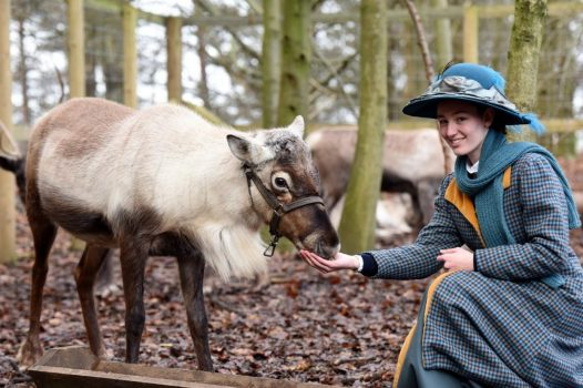Beamish Open Air Museum, north of England - Meet Father Christmas's reindeer