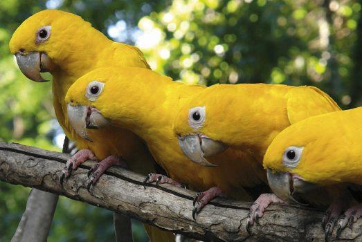 Bird_Park_Iguassu_birds, Brazil