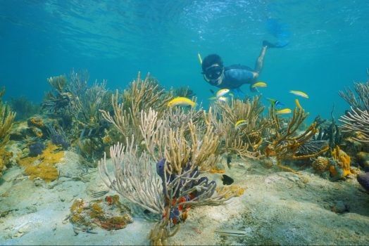 Panama, Bocas del Toro, ocean, snorkel, marine, reef © Owner www.panamajourneys.com