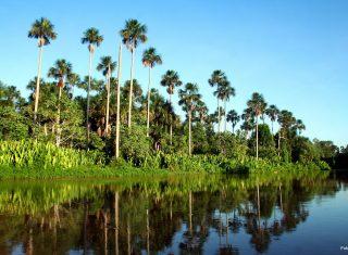 Pantanal, Brazil NCN