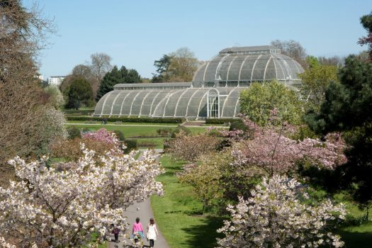 Palm House © Kew Gardens