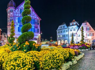 Chrysanthemum Festival in Lahr at night time, Germany