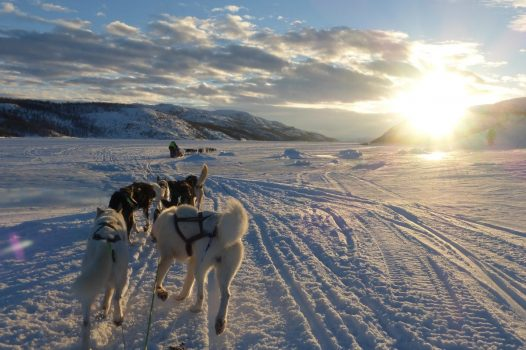 Dog sledding from the ice hotel © Carroll Gifford/ Hurtigruten
