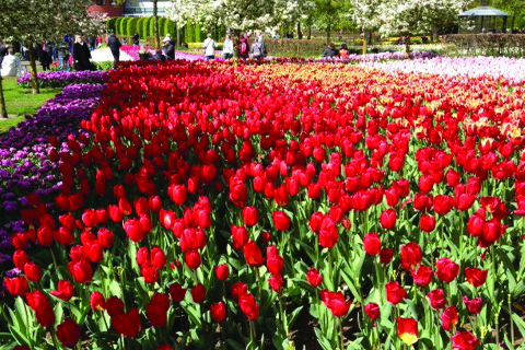 Flowers and Gardens Group Tours