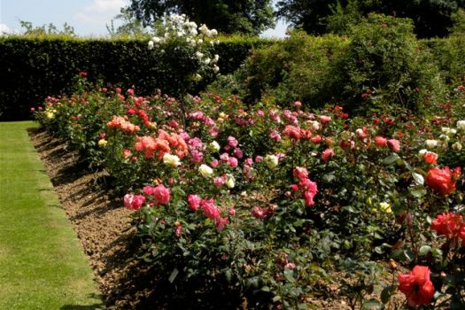 Rose garden - Mesnil Geoffroy Castle Ermenouville Normandy, France