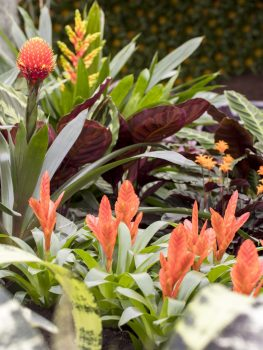 Floralies, Ghent, Belgium - Bromelia © Karin Borghouts
