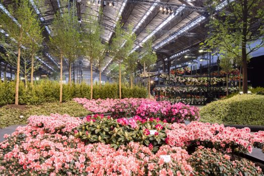 Floralies, Ghent, Belgium - Floralienhal-2 © Karin Borghouts