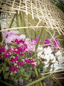 Floralies, Ghent, Belgium - Sint-Pieters-5 © Karin Borghouts