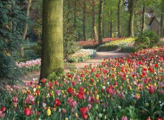 Floralia ©Floralia Brussels