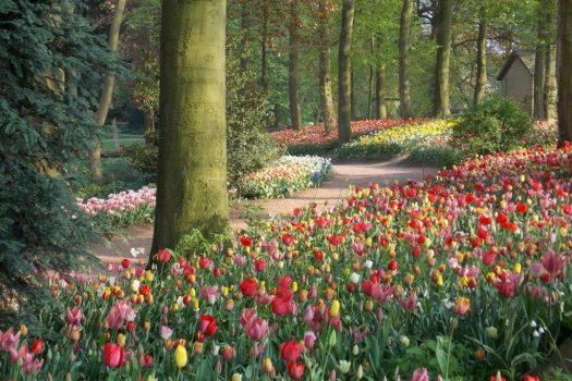 Floralia Brussels and Keukenhof Gardens - Flower Power!