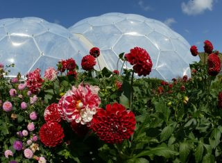 Cornwall tour Flower Biome Eden Project © Supplied by The Eden Project