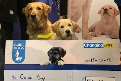 Guide Dogs for the Blind - Puppies