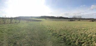Hush Heath Winery, Tonbridge, Kent (KWY-NCN)