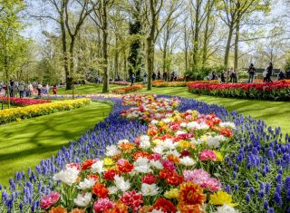 Flower Shows in Belgium and Holland