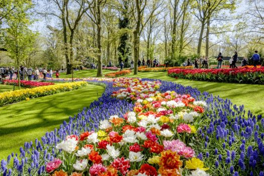 Dutch bulbfields mini cruise 2018 glorious keukenhof gardens for Jardines de keukenhof