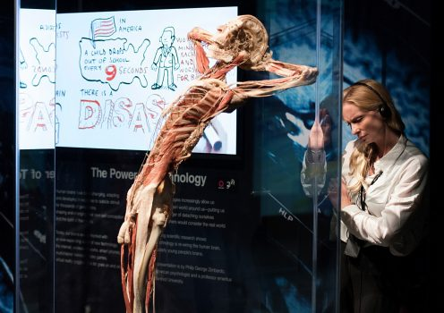 Body Worlds (05) © Jerry Knies
