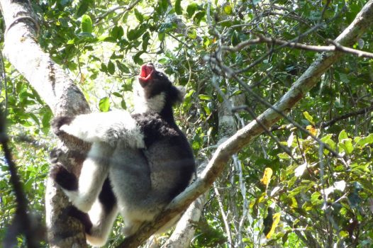 Africa, Madagascar, indri lemur, group travel, group tour