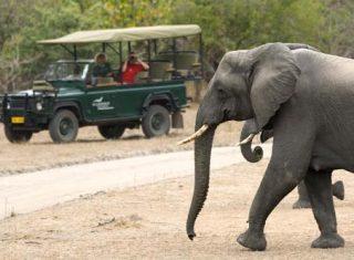 Malawi, Africa Camp - Game Drive Elephant