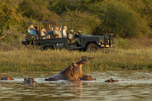 Malawi, Africa Camp - Game Drive Hippo