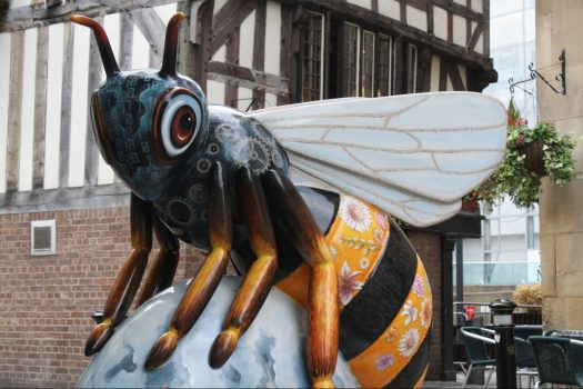 Manchester Sightseeing - Bee in the City (10-DBE-NCN)