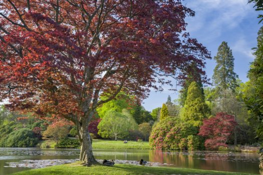 Middle lake at Sheffield Park East Sussex ©National Trust images-Andrew Butler