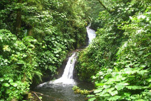 Monteverde Reserve, Costa Rica NCN