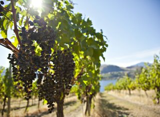Okanagan Valley, Canada ©Destination-Canada