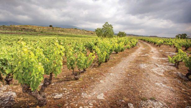 Old Vineyard Marqués de Riscal at Rioja, Cruise Spain ©Old Vineyards Marqués de Riscal at Rioja