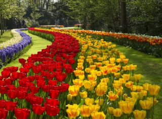 Holland, Netherlands, bulbfields, Keukenhof Gardens - European Group Travel NCN