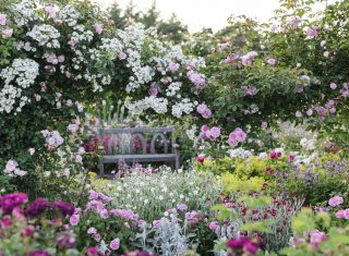 RHS Garden Rosemoor, Devon - The Shrub Rose Garden in Summer © RHS, Jason Ingram