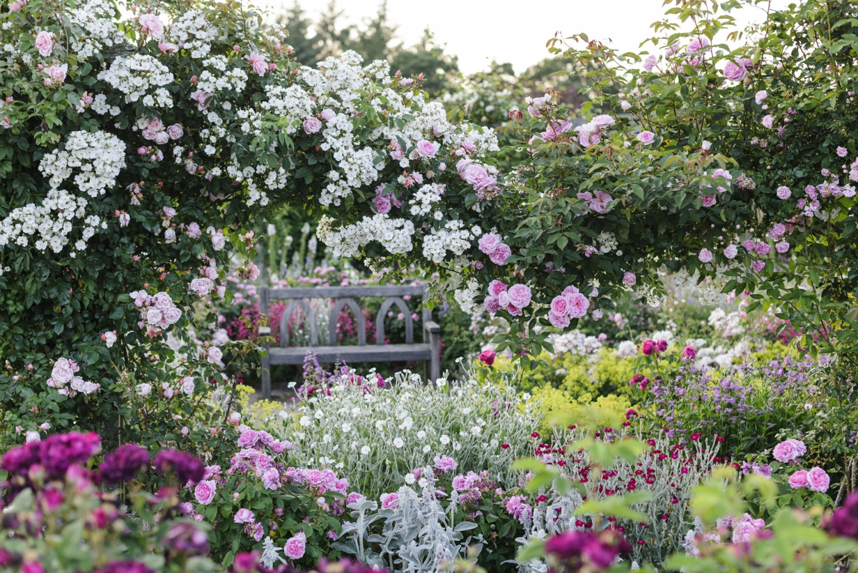 RHS Garden Rosemoor, Devon - The Shrub Rose Garden in Summer © RHS, Jason Ingram