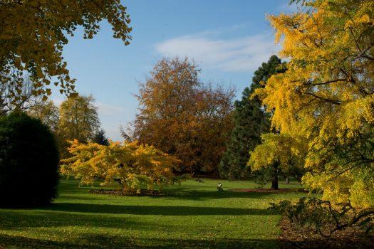 Royal Botanic Gardens, Kew, Richmond, London - Autumn colour © RBG Kew