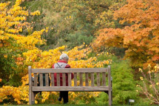 Royal-Botanic-Gardens-Kew-Richmond-London-Autumn-colour-02-©-RBG-Kew
