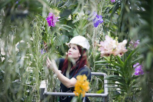 Orchid Festival_3 © Jeff Eden, RBG Kew