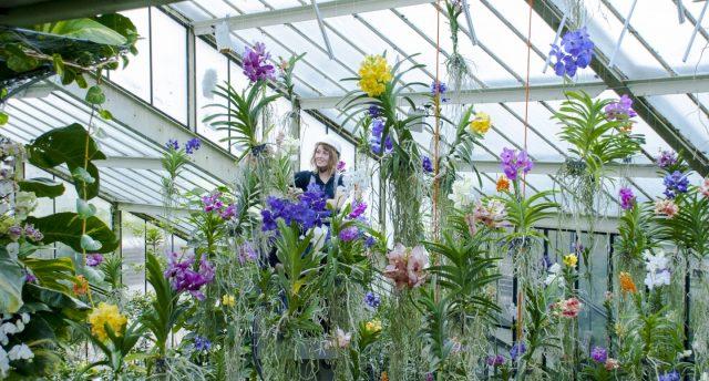 Orchid Festival © Sav Suri, RBG Kew
