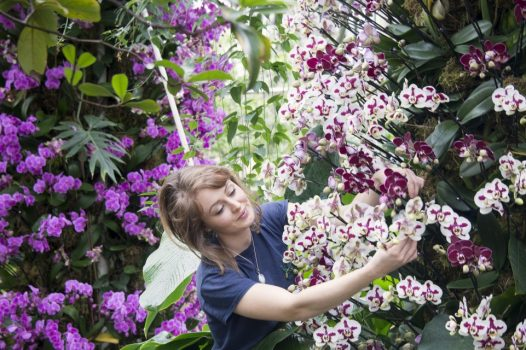 Royal Botanic Gardens, Kew, Richmond, London - Hannah Button, botanical horticulturist at Kew, putting the finishing touches at Orchid Festival © Jeff Eden, RBG Kew