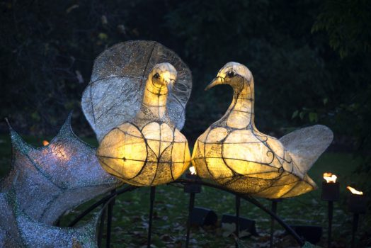 Royal Botanic Gardens, Kew, Richmond, London - Two Turtle Doves in Kew's Fire Garden © Jeff Eden, RBG Kew