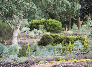 RHS Garden Wisley Flower Show