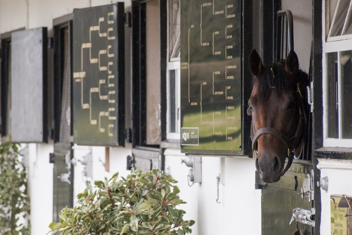The National Stud, Newmarket, Suffolk - In the stable